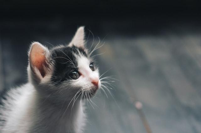 Jak cechy powinien mieć dobry żwirek dla kota